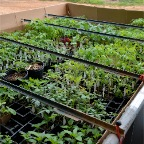 Trailer of plants for sale